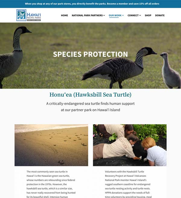 Our Work: Species Protection